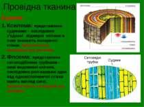 Провідна тканина Будова: Ксилема: представлена судинами - послідовно з'єднані...