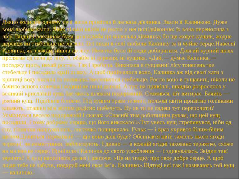 Давно колись в одному селі жила привітна й ласкава дівчинка. Звали її Калинко...