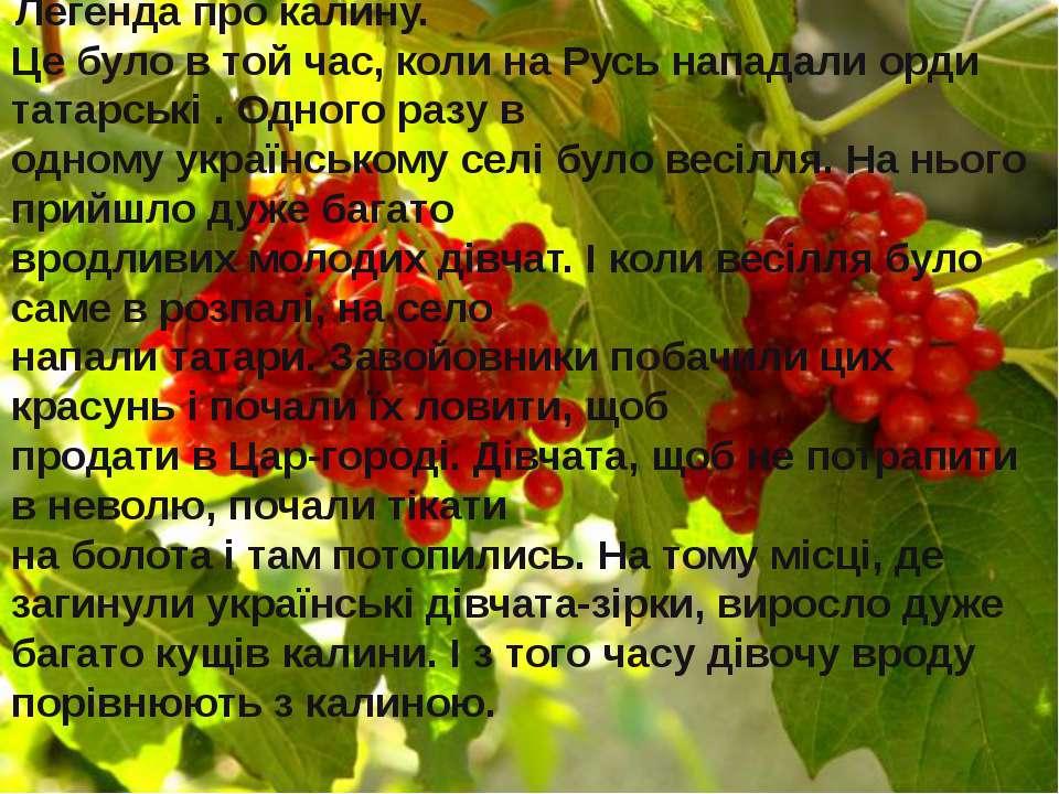 .Легенда про калину. Це було в той час, коли на Русь нападали орди татарські ...