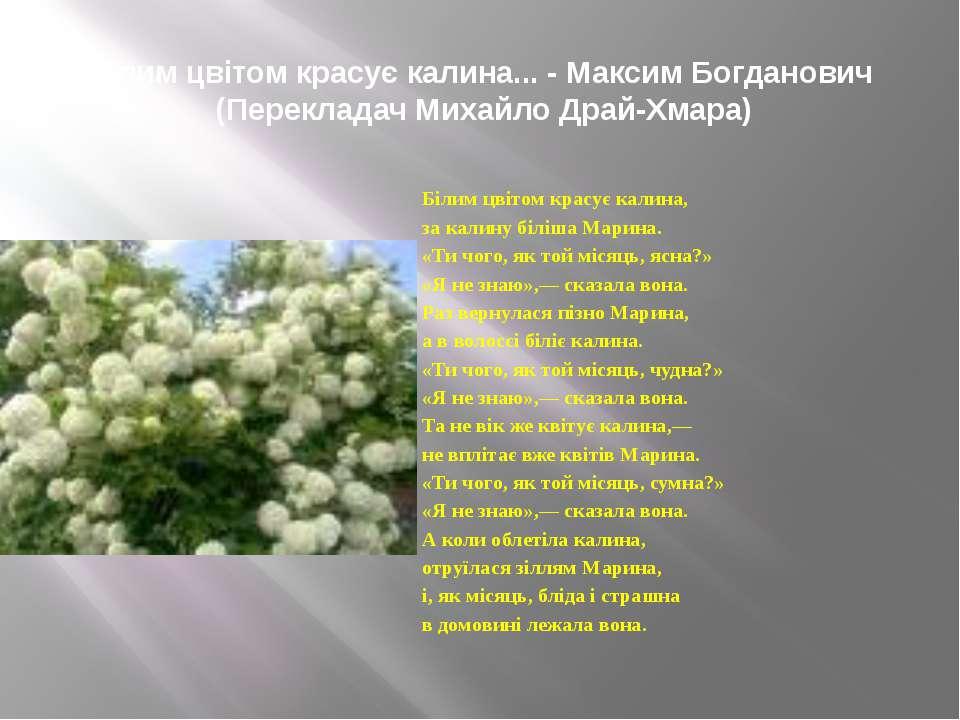 Білим цвітом красує калина... - Максим Богданович (Перекладач Михайло Драй-Х...