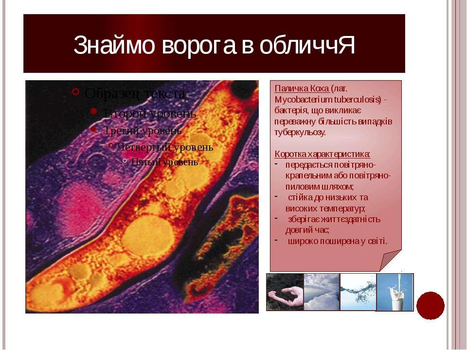 Знаймо ворога в обличчЯ Паличка Коха (лат. Mycobacterium tuberculosis) - бакт...