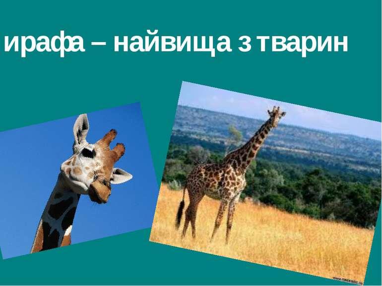 Жирафа – найвища з тварин Гришельова Т.І.,учитель географії Запорізької ЗШ Ап...