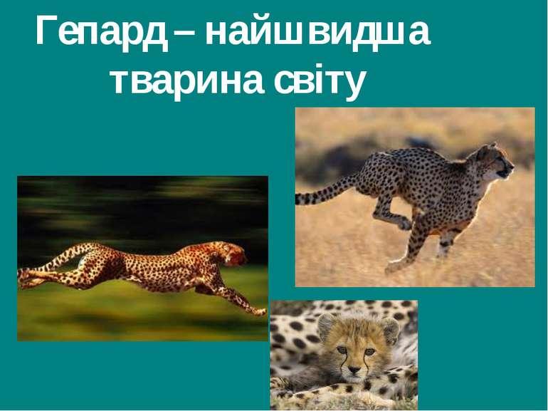 Гепард – найшвидша тварина світу Гришельова Т.І.,учитель географії Запорізько...