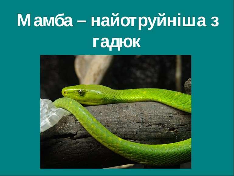 Мамба – найотруйніша з гадюк Гришельова Т.І.,учитель географії Запорізької ЗШ...