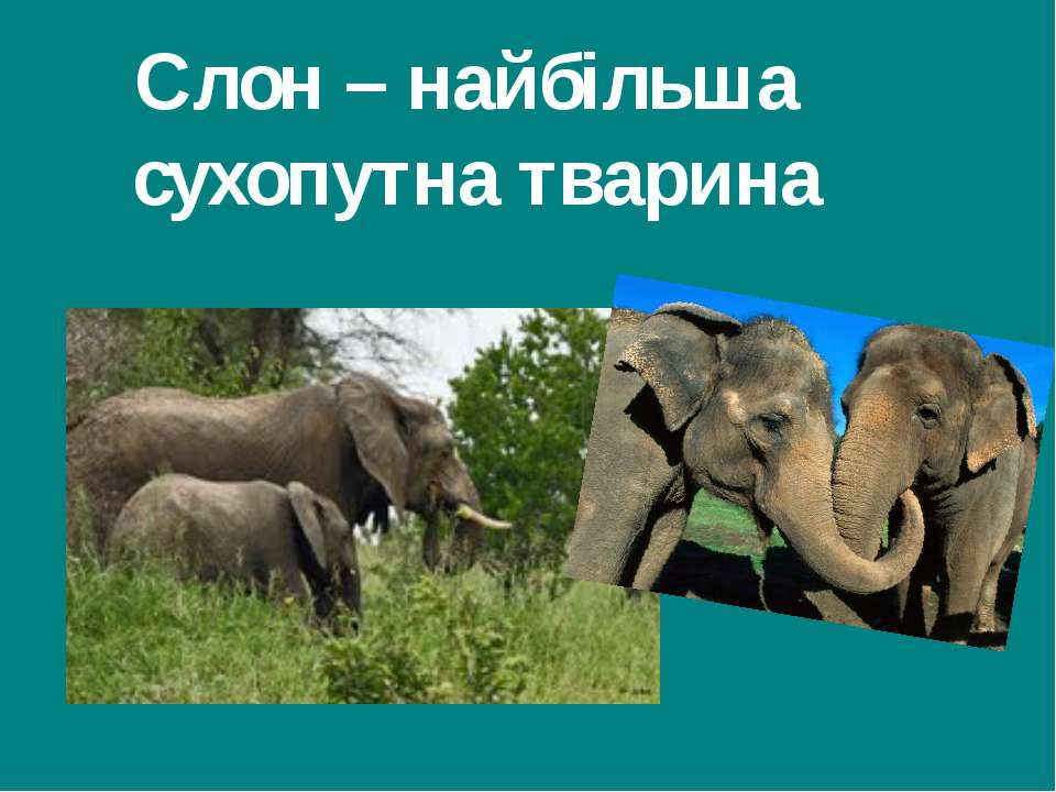 Слон – найбільша сухопутна тварина Гришельова Т.І.,учитель географії Запорізь...