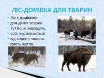 Ліс є домівкою для диких тварин. Тут вони знаходять собі їжу, ховаються від в...