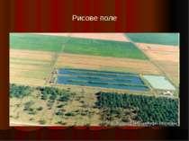 Рисове поле
