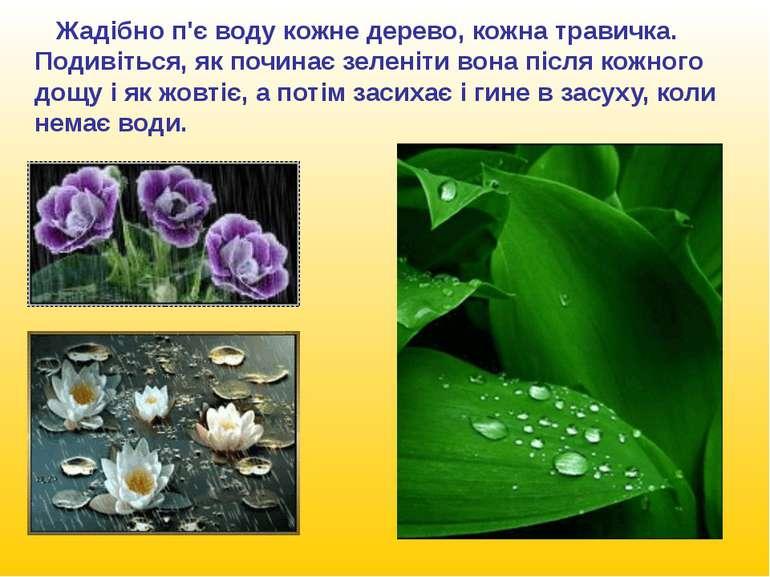 Без води не виростиш ні пшениці, ні бавовни. Яблуні і груші загинуть, якщо лю...