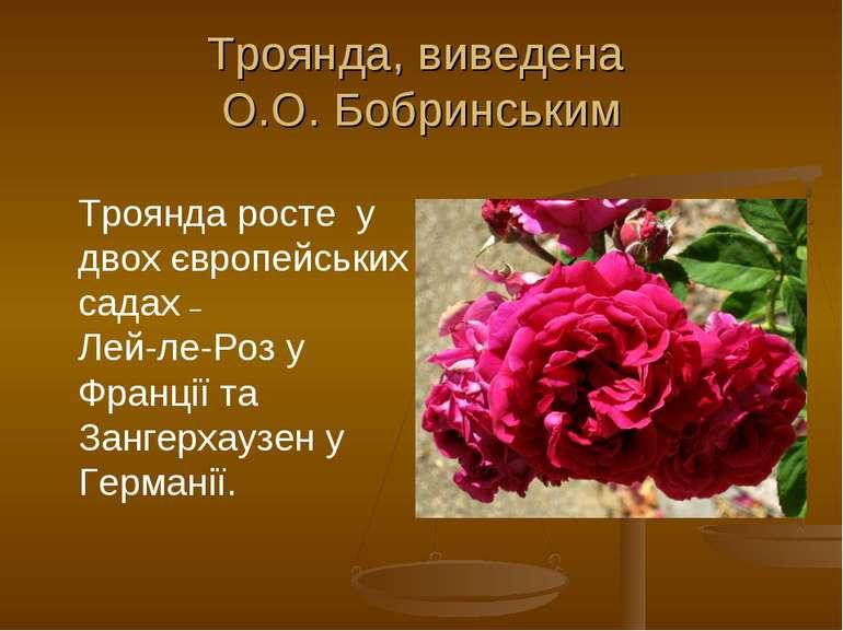 Троянда, виведена О.О. Бобринським Троянда росте у двох європейських садах – ...