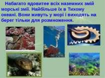 Набагато ядовитее всіх наземних змій морські змії. Найбільше їх в Тихому океа...