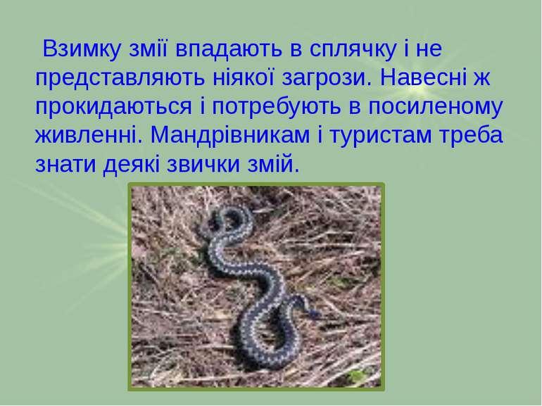 Взимку змії впадають в сплячку і не представляють ніякої загрози. Навесні ж п...