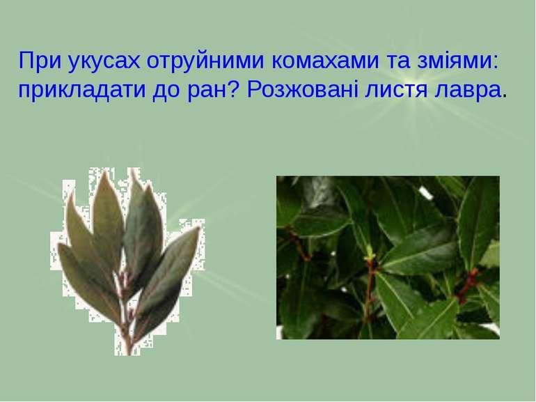 При укусах отруйними комахами та зміями: прикладати до ран? Розжовані листя л...