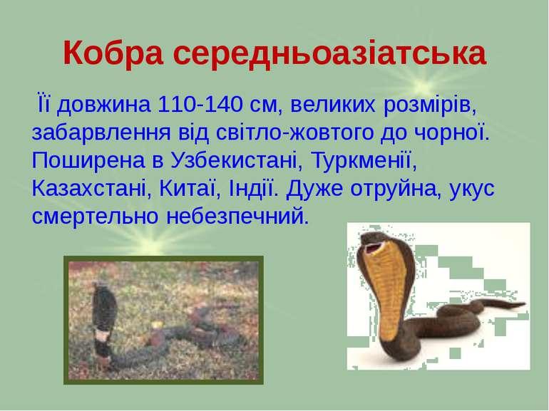 Кобра середньоазіатська Її довжина 110-140 см, великих розмірів, забарвлення ...