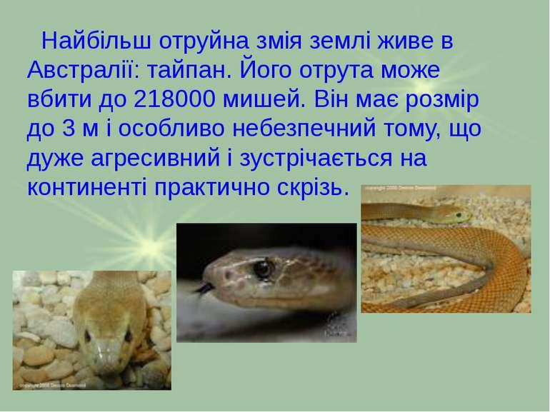 Найбільш отруйна змія землі живе в Австралії: тайпан. Його отрута може вбити ...