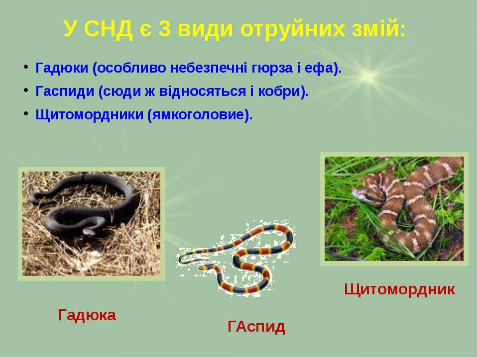 У СНД є 3 види отруйних змій: Гадюки (особливо небезпечні гюрза і ефа). Гаспи...
