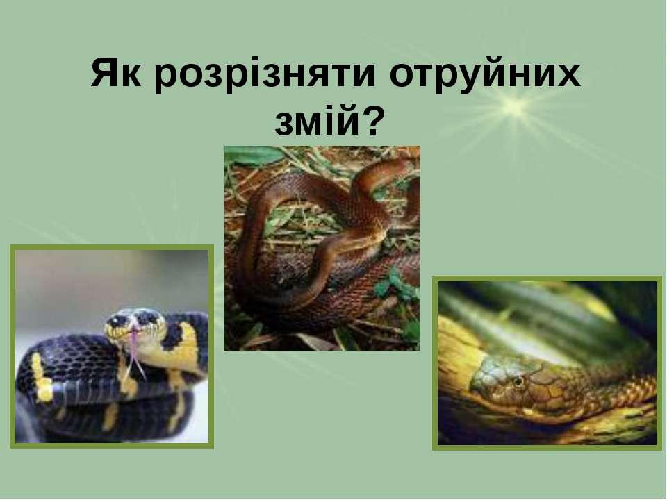 Як розрізняти отруйних змій?