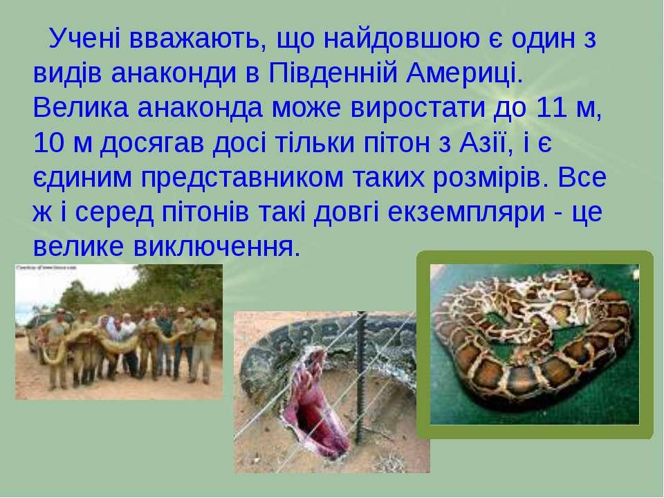Учeні вважають, що найдовшою є один з видів анаконди в Південній Америці. Вел...