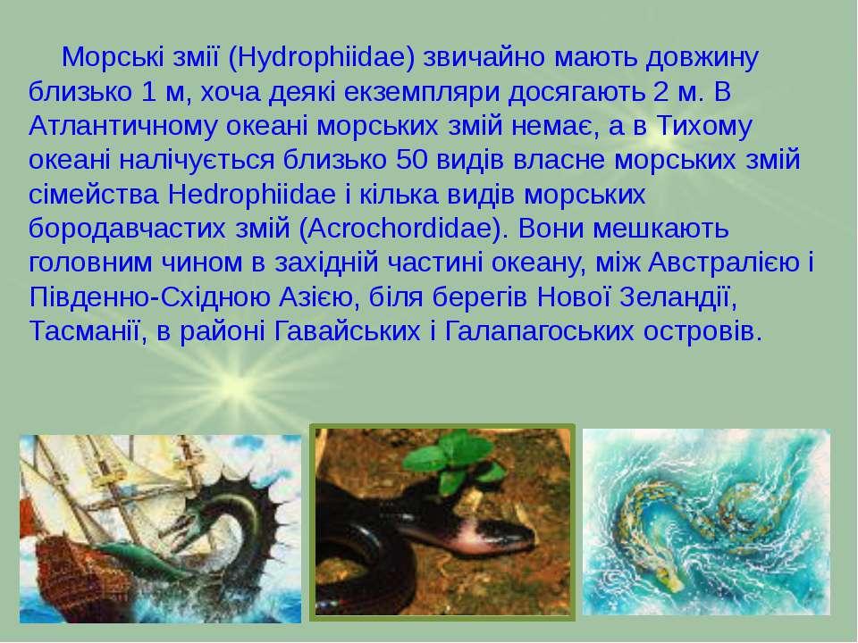 Морські змії (Hydrophiidae) звичайно мають довжину близько 1 м, хоча деякі ек...