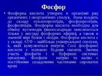 Фосфор Фосфорна кислота утворює в організмі ряд органічних i неорганічних спо...