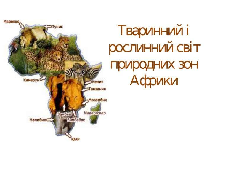 Тваринний і рослинний світ природних зон Африки