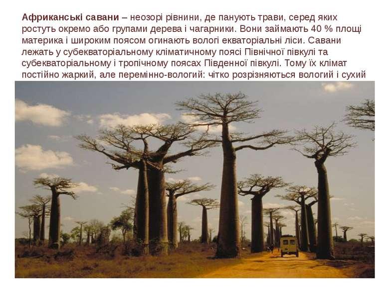 Африканські савани – неозорірівнини, де панують трави, серед яких ростуть ок...