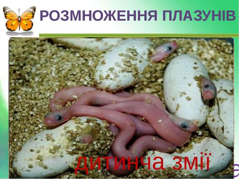 РОЗМНОЖЕННЯ ПЛАЗУНІВ ЧЕРЕПАХА ЯЙЦЯ дитинча черепахи дитинча крокодила дитинча...