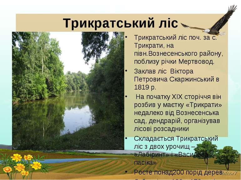 Трикратський ліс Трикратський ліс поч. за с. Трикрати, на півн.Вознесенського...