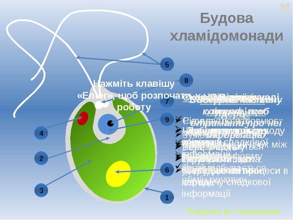 Будова хламідомонади Виберіть частину клітини, щоб отримати про неї інформаці...
