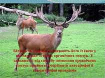 Більшість тварин споживають його із їжею у вигляді вже готових органічних спо...