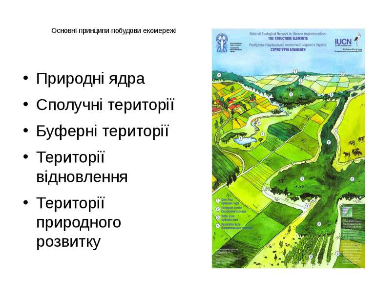 Основні принципи побудови екомережі Природні ядра Сполучні території Буферні ...