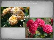 Останнє цвітіння