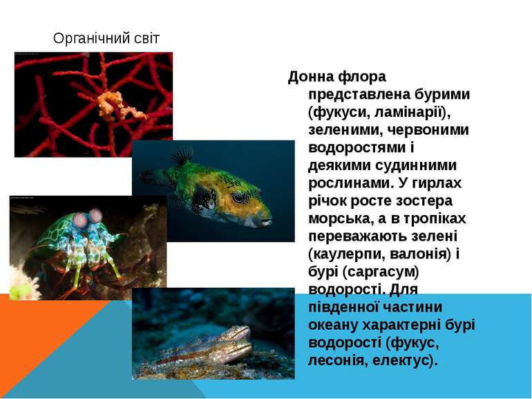 Органічний світ Донна флора представлена бурими (фукуси, ламінарії), зеленими...