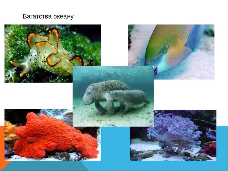Багатства океану