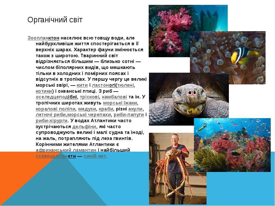 Органічний світ Зоопланктоннаселює всю товщу води, але найбурхливіше життя с...