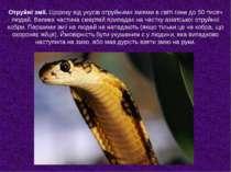 Отруйні змії. Щороку від укусів отруйними зміями в світі гине до 50 тисяч люд...