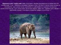 Африканський і індійський слон. Ці розумні тварини відповідальні за вбивства ...