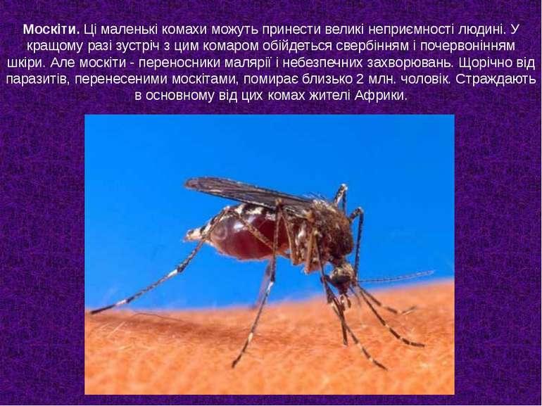 Москіти. Ці маленькі комахи можуть принести великі неприємності людині. У кра...