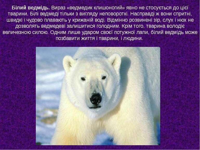 Білий ведмідь. Вираз «ведмедик клишоногий» явно не стосується до цієї тварини...