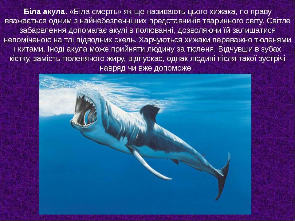 Біла акула. «Біла смерть» як ще називають цього хижака, по праву вважається о...