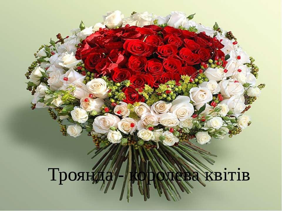 Троянда - королева квітів