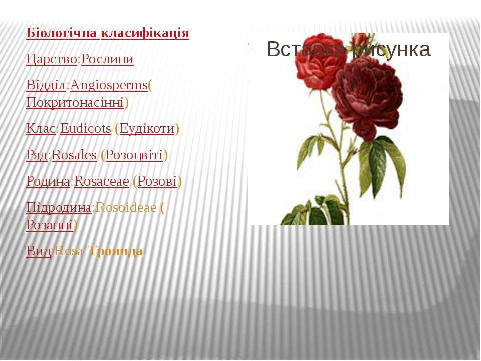 Біологічна класифікація Царство:Рослини Відділ:Angiosperms(Покритонасінні) Кл...