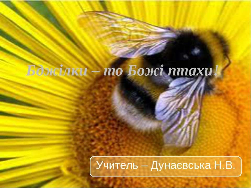 Бджілки – то Божі птахи! Учитель – Дунаєвська Н.В.
