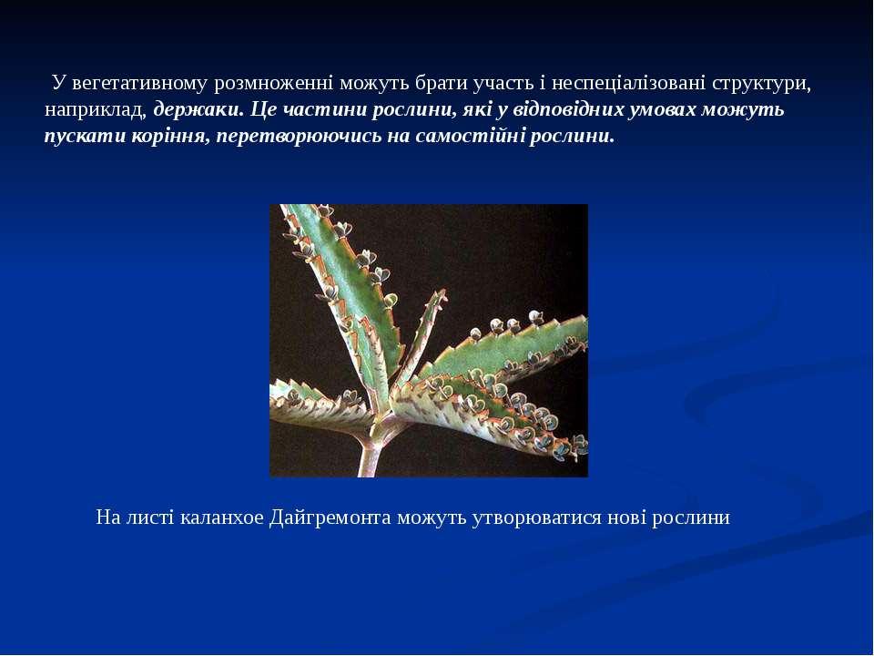 У вегетативному розмноженні можуть брати участь і неспеціалізовані структури,...