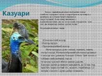 Казуари Казуар-єдинийрідвеликихнелітаючихптахів сімействаказуаровихзаг...