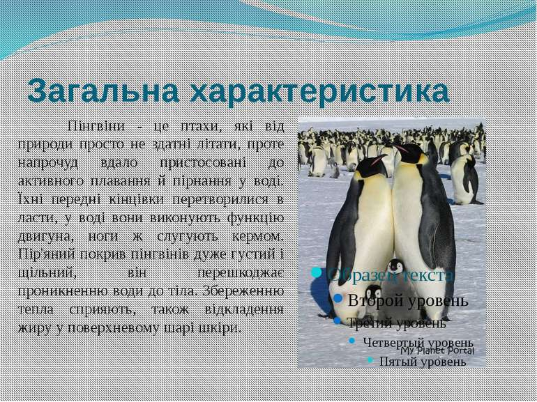 Загальна характеристика Пінгвіни - це птахи, які від природи просто не здатні...