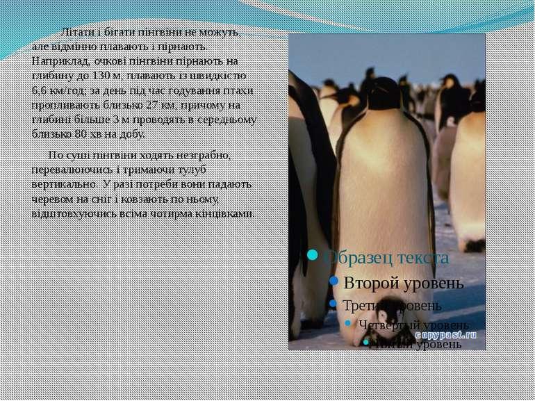 Літати і бігати пінгвіни не можуть, але відмінно плавають і пірнають. Наприкл...