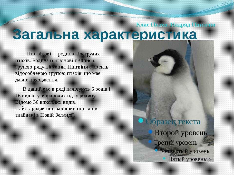 Загальна характеристика Пінгвінові— родина кілегрудих птахів. Родина пінгвіно...