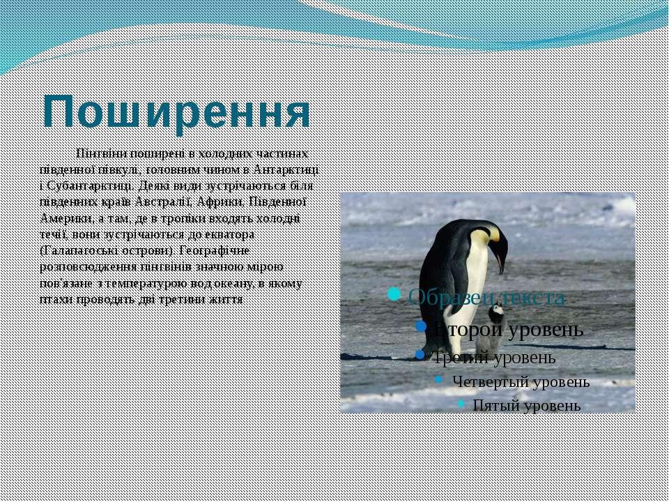 Поширення Пінгвіни поширені в холодних частинах південної півкулі, головним ч...
