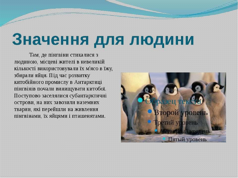 Значення для людини Там, де пінгвіни стикалися з людиною, місцеві жителі в не...