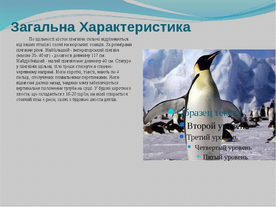 Загальна Характеристика По щільності кісток пінгвіни сильно відрізняються від...